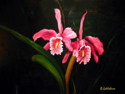 Two Orchids*
